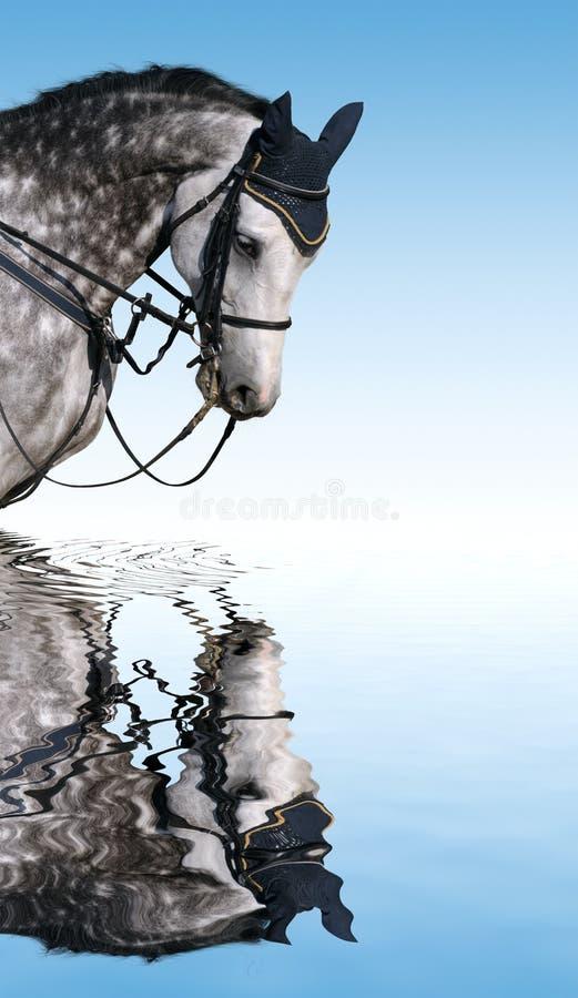 起斑纹灰色马 库存照片