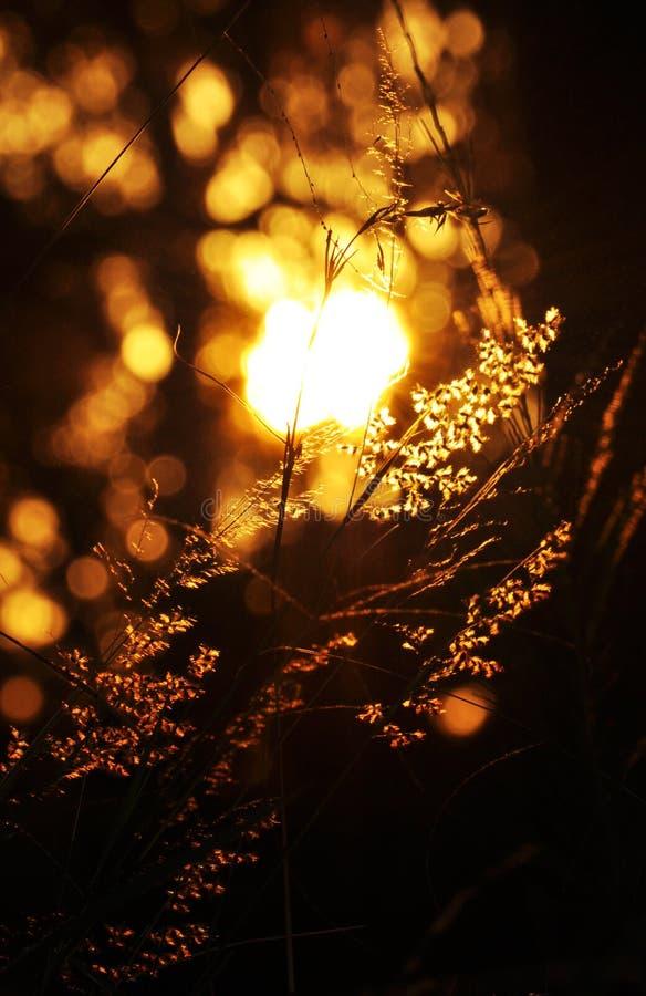 起斑纹的阳光形状在黑暗的森林背景中 免版税库存图片