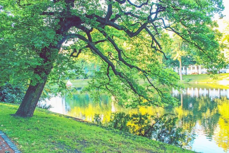 起波纹的水表面上反映的树背景  免版税库存照片