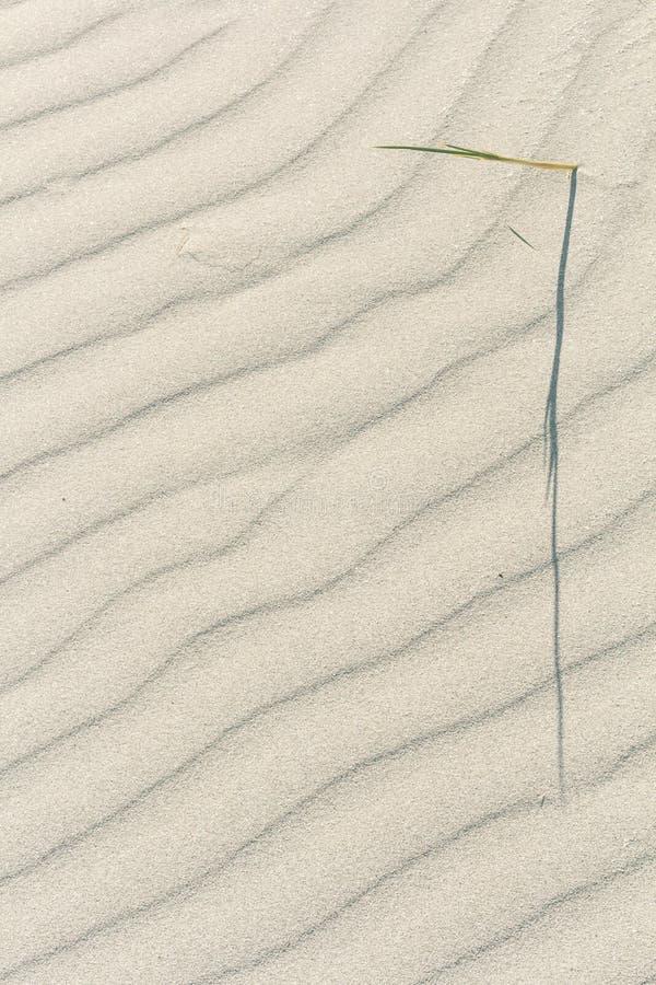 起波纹的沙子纹理 Sanday,奥克尼,苏格兰 免版税库存图片