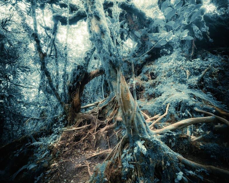 超现实的颜色的幻想热带密林森林 概念landsc 库存照片