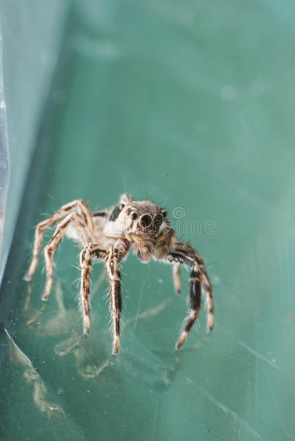 超级宏观蜘蛛 库存照片
