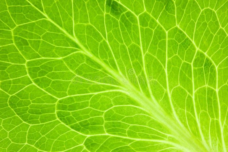 超级新绿色叶子的宏指令 免版税库存图片