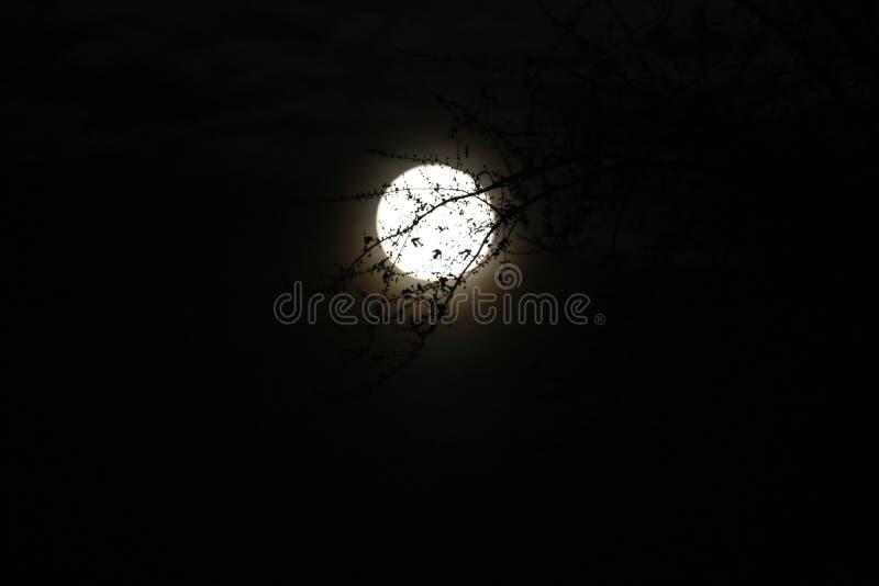 超级月亮 库存照片