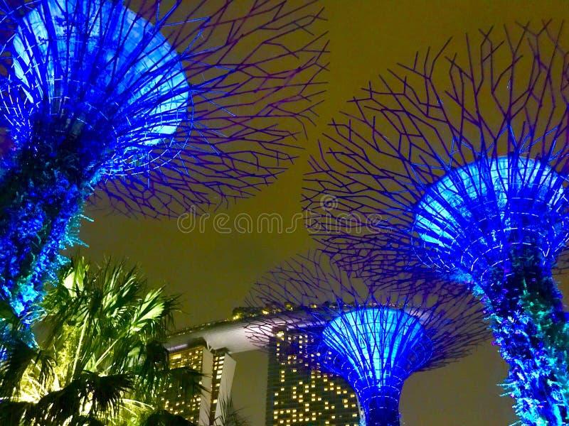 超级树在晚上-新加坡` s植物园 免版税库存照片