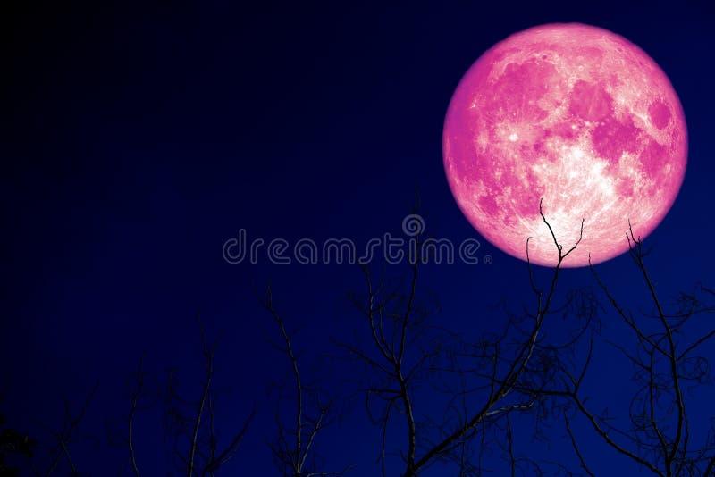 超级桃红色蛋月亮在剪影植物和树在夜空 库存图片