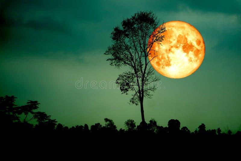 超级纯种月亮后面剪影分支树绿色天空 免版税图库摄影