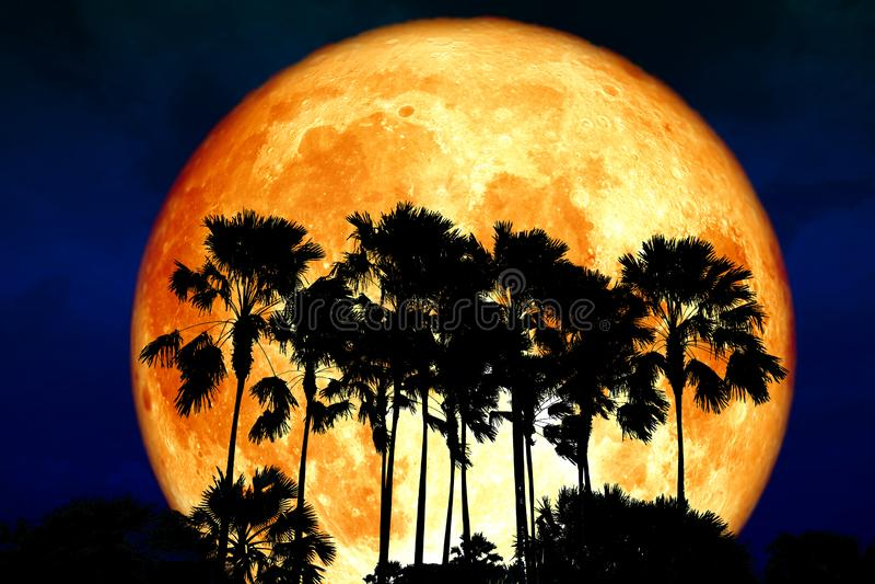 超级纯种月亮后面剪影高棕榈在黑暗的夜sk 免版税库存照片