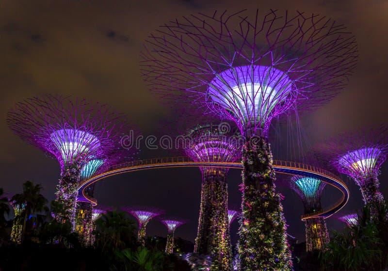 超级结构树在新加坡 免版税库存照片