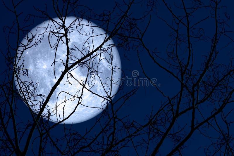 超级蛋月亮在剪影植物和树在夜空 库存图片