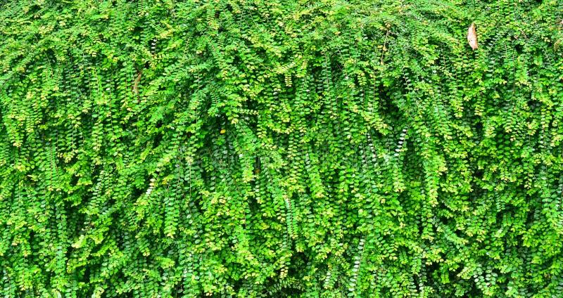 越南叶子-花卉生长在热带庭院里 免版税库存照片