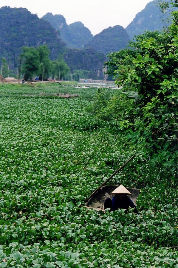 越南妇女工作 免版税库存照片