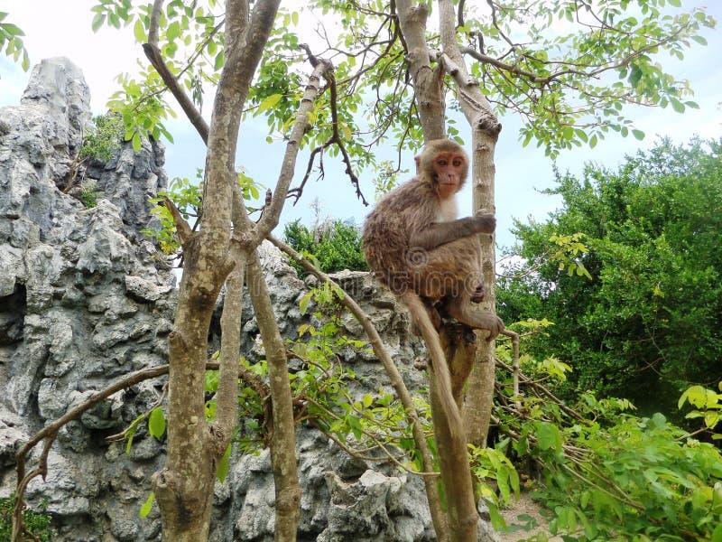越南,猴子海岛, 2017年5月 图库摄影
