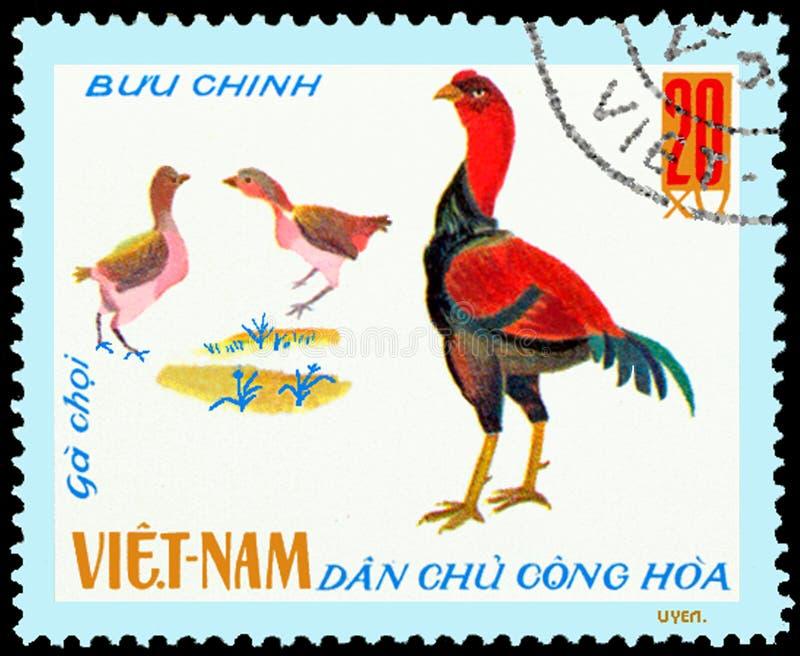 越南-大约1968年:在越南打印的邮票显示好斗的公鸡,一系列的家禽 免版税库存照片