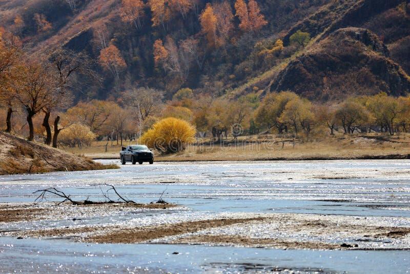 越野车辆驾驶在金黄桦树森林 库存图片