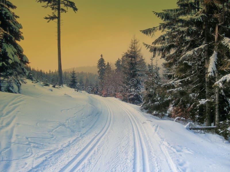 越野轨道在云杉的树森林里冬天晚上 库存照片