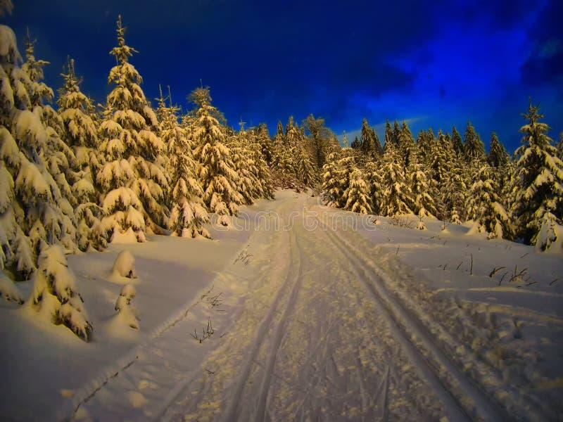 越野轨道在云杉的树森林里冬天晚上 库存图片