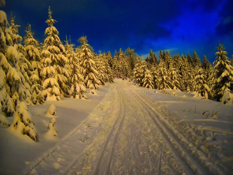 越野轨道在云杉的树森林里在冬天白天 库存照片