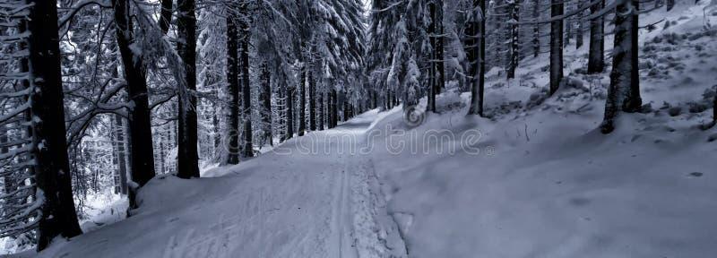越野轨道在森林里在冬天白天 免版税库存照片