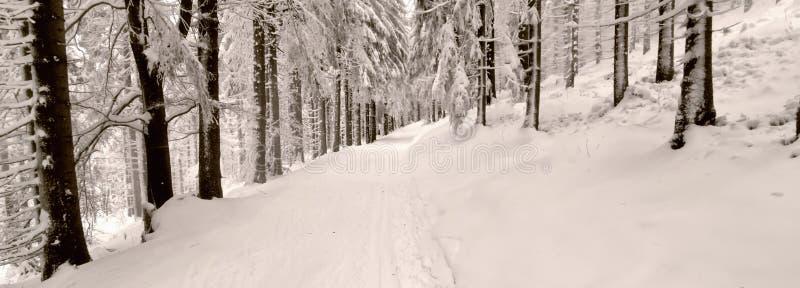 越野轨道在森林里在冬天白天 库存图片