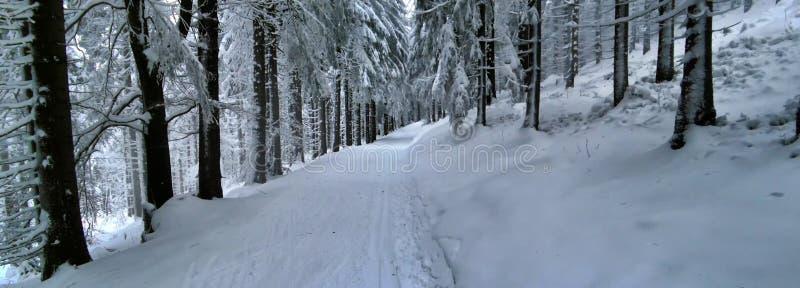 越野轨道在森林里在冬天白天 图库摄影