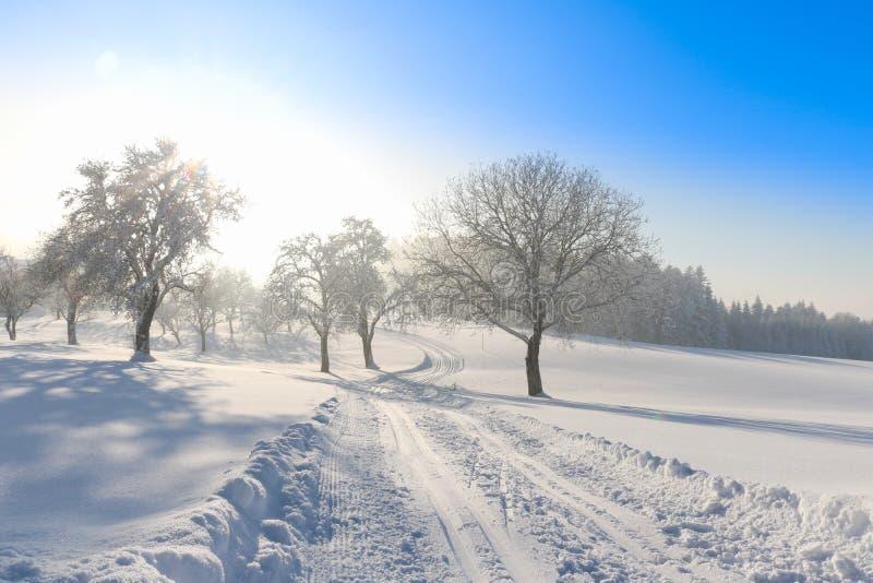 越野滑雪轨道在奥地利,冬天山,粉末雪 免版税库存图片