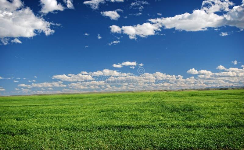 黑足印第安族国家油腻草平原  库存图片