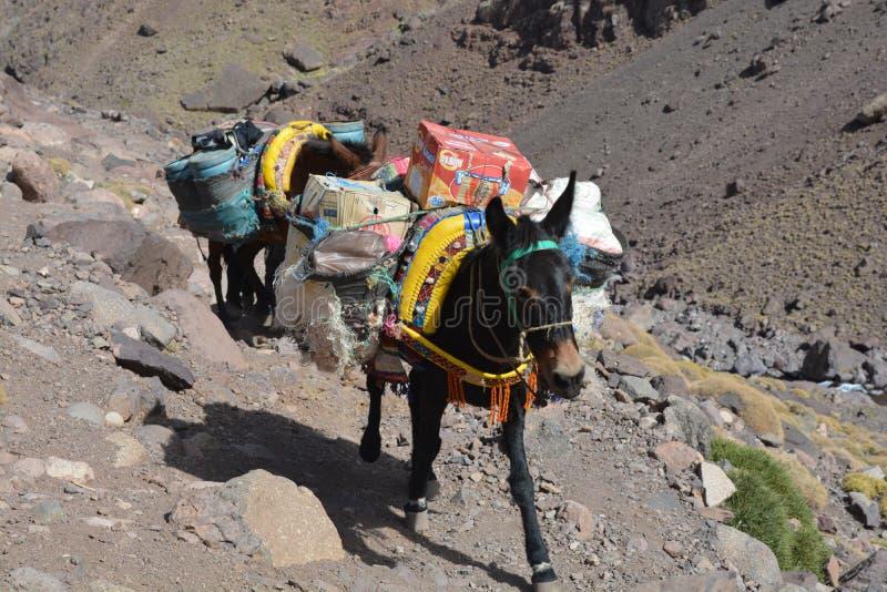 足迹向从Imlil的图卜卡勒峰在摩洛哥 北非 库存图片