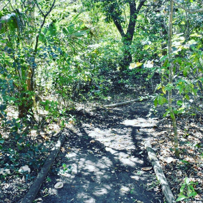 足迹在公园 库存照片