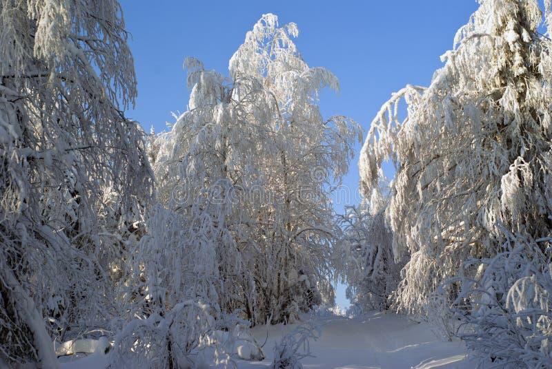 足迹在冷淡的冬天森林里 免版税库存图片