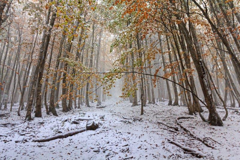 足迹在多雪的落叶林里 免版税图库摄影