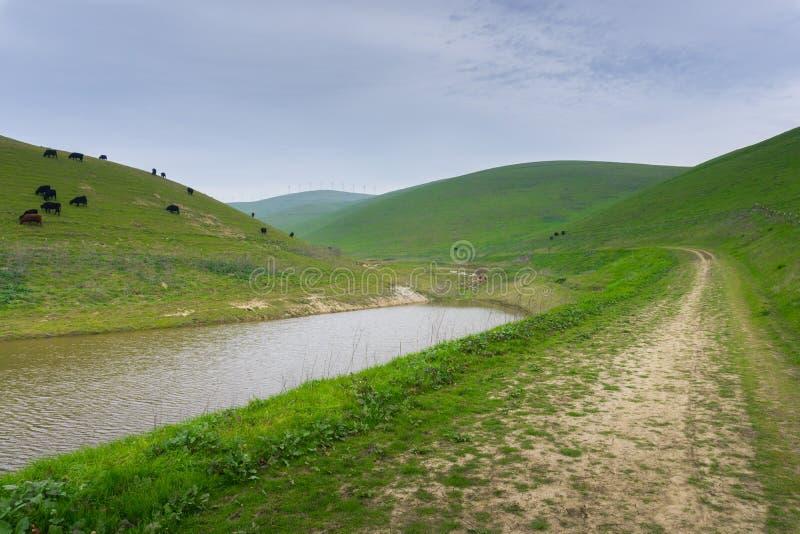 足迹在如毛刷高峰地方公园,东部旧金山湾,利弗摩尔,加利福尼亚 库存图片