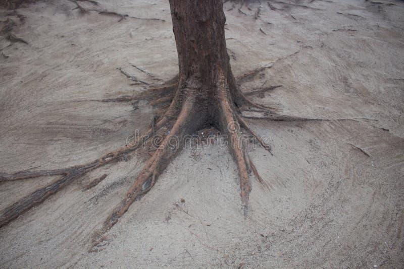 足迹在海附近的森林沙丘的 库存图片