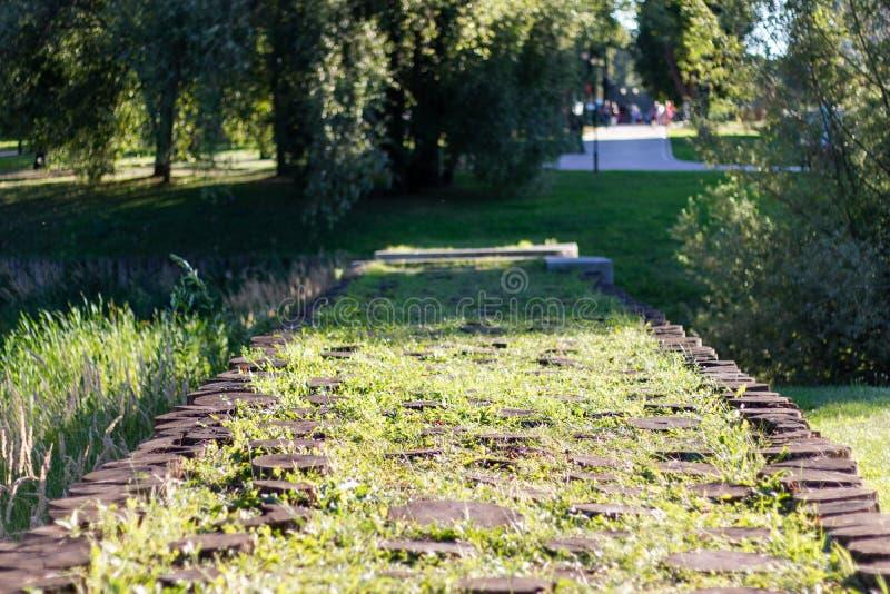 足迹用木树桩盖,长满与草 在背景树和道路 免版税图库摄影