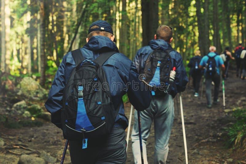足迹的远足者在森林里 免版税库存照片