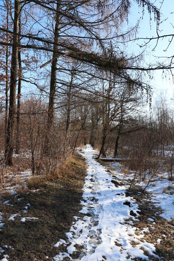 足迹通过森林在冬天 免版税库存照片