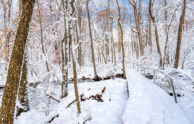 足迹通过雪厚实的层数包括的森林  免版税库存照片