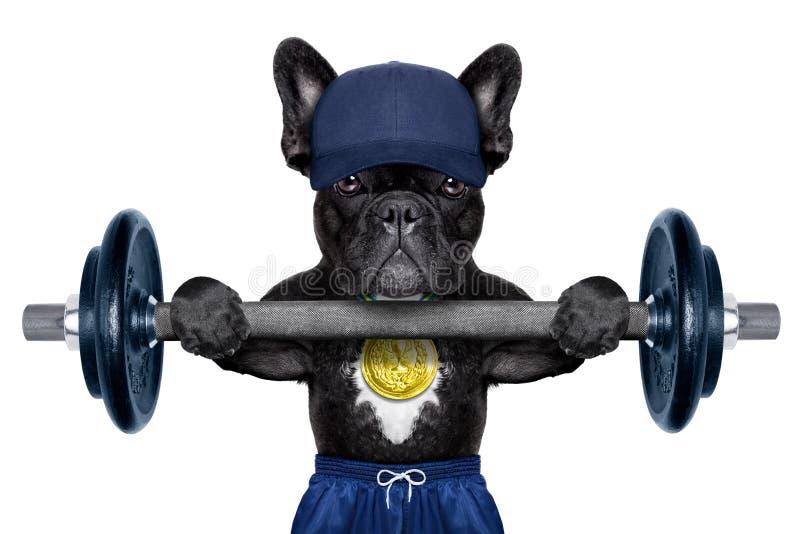 活跃体育狗 库存图片