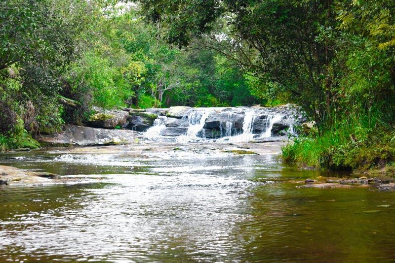 跌倒发怒瀑布在Phu Kra Dueng国立公园的大树 Loei?? 免版税图库摄影