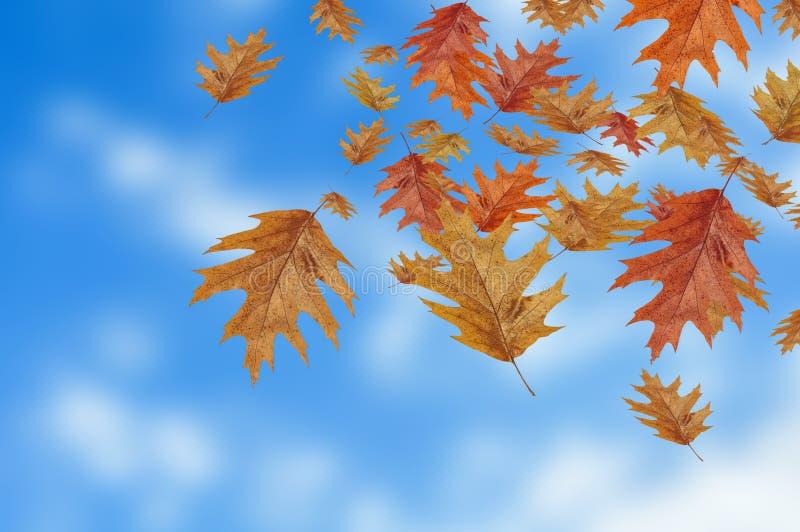 跌倒在迷离背景的色的秋叶 免版税库存图片