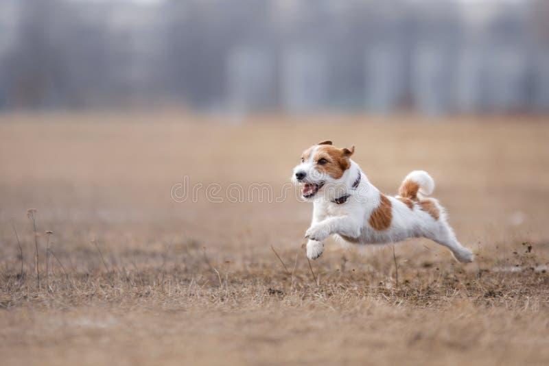 跑和使用在公园的狗 图库摄影