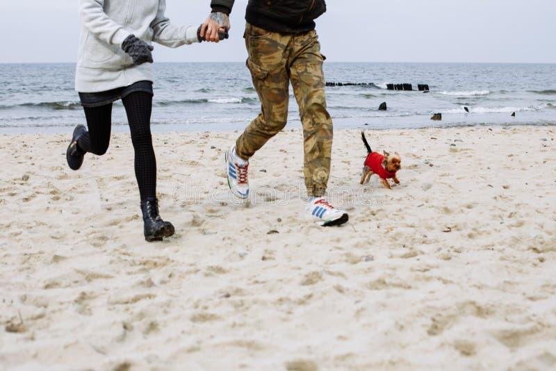 跑在与狗的海滩 库存照片