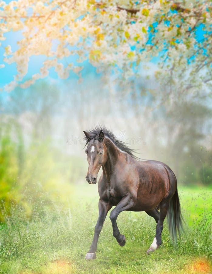 跑在春天自然背景的绿草的黑马 库存照片