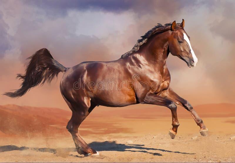跑在沙漠的马 免版税库存图片