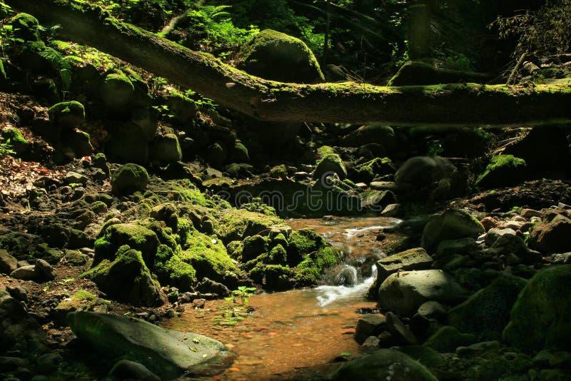 跑在生苔岩石的神奇森林小河 免版税库存图片
