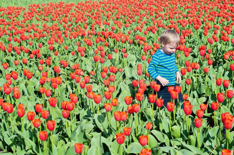 跑在郁金香领域的小男孩 图库摄影