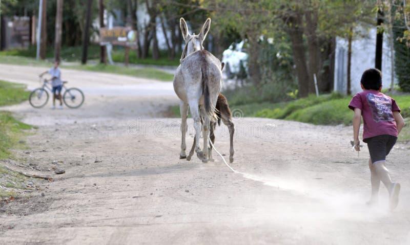 跑往驴的男孩 免版税库存图片