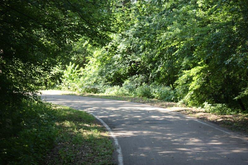 跑步或循环的森林公路在阳光下 免版税库存图片