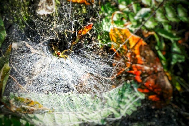 跑蜘蛛 库存照片