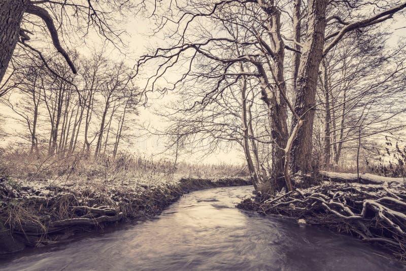 跑通过一个森林的河冬天 库存图片